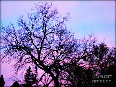 Frank J Casella Royalty-Free and Rights-Managed Images - Purple Clouds Tree Branches Silhouette by Frank J Casella