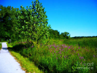 Frank J Casella Royalty-Free and Rights-Managed Images - Purple Flowers by the Trail by Frank J Casella
