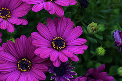 Photograph - Purple Flowers by Nature Photography