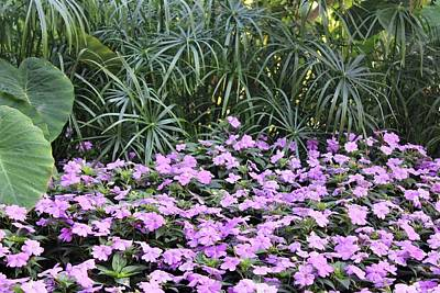 Photograph - Purple Gardens by Shonda Mcbride
