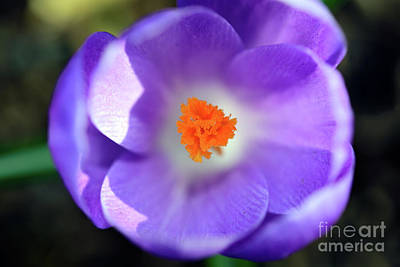 Royalty-Free and Rights-Managed Images - Purple Is My Favourite Color 7 by Terry Elniski