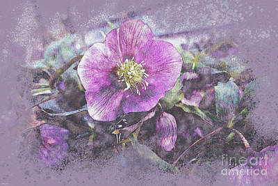 Science Collection - Purple Lenten Rose by Bentley Davis