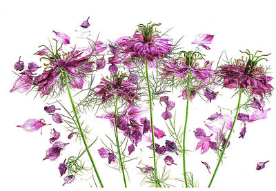 Abstract Stripe Patterns - Purple Love in a mist by Annes Photos
