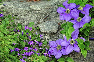 Anne Geddes Collection - Purple On The Rocks by Debbie Oppermann