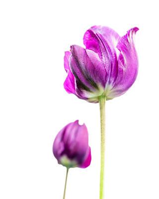 Beastie Boys - Purple Tulips by AVM Maker
