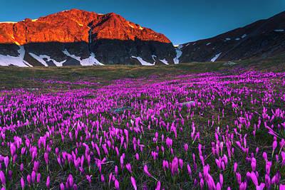 Patriotic Signs - Purple Valley by Evgeni Dinev