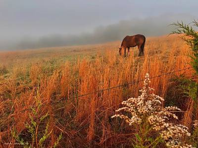 Animals Royalty-Free and Rights-Managed Images - Quarter Horse Grazing   by Roe Rader