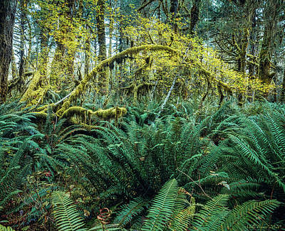 Katharine Hepburn - Quinault Rainforest 10-20-020 by Mike Penney