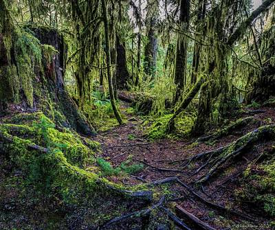World War 2 Action Photography Royalty Free Images - Quinault Rainforest 125 Royalty-Free Image by Mike Penney