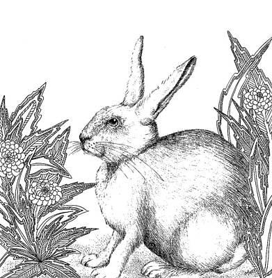 Animals Drawings - Rabbit by Jennifer Wheatley Wolf