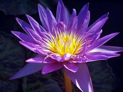 Unicorn Dust - Purple Water Lily by Debbie Fieno