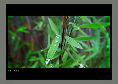 Painting - Rain On Bamboo by Charles Stuart