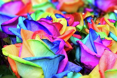 Photograph - Rainbow Roses by Russ Harris