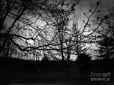 Photograph - Raindrops in the Dark by Onedayoneimage Photography