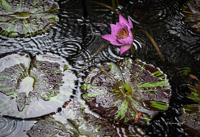 Bringing The Outdoors In - Rainy Day at the Lily Pond II by Suzanne Gaff