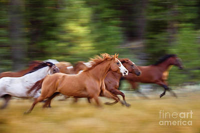 Photograph - Ranch Horses In Motion by Shelley Paulson