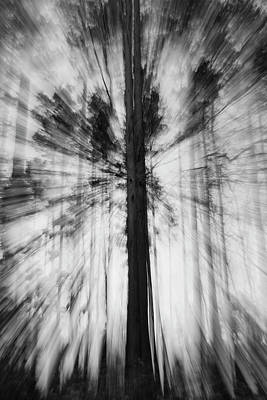 Photograph - Rays of Wood by Julia Chodor