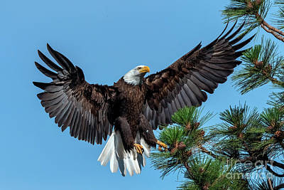 Royalty-Free and Rights-Managed Images - Reaching for the Landing by Mike Dawson