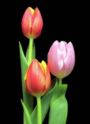 Space Photographs Of The Universe - Red And Pink Tulips by Johanna Hurmerinta