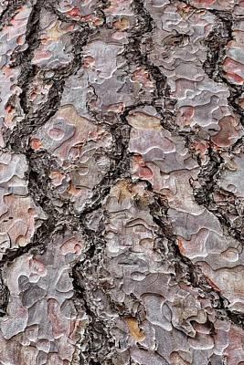 Photograph - Red Bark  by Mark Bear