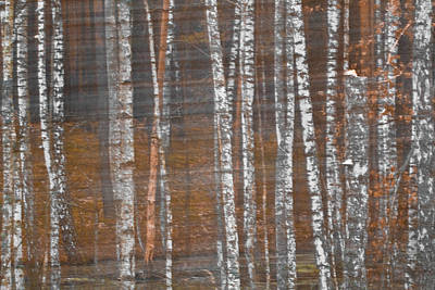 Photograph - Red Birch-Tree by Julia Chodor