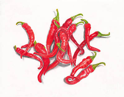 Drawings Royalty Free Images - Red Cayenne Peppers from My Garden on White Royalty-Free Image by Conni Schaftenaar