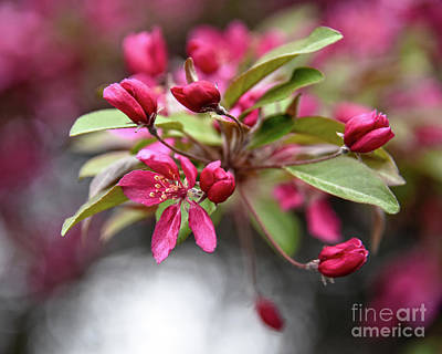 Reptiles - Red Crabapple Flowers by Catherine Sherman