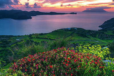 Everett Collection - Red Flowers Of Milos by Evgeni Dinev