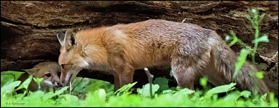 Vintage Chevrolet - Red Foxes, Adult and Kit by A Macarthur Gurmankin