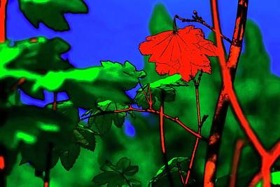 Jerry Sodorff Royalty-Free and Rights-Managed Images - Red Maple Leaves 2 by Jerry Sodorff
