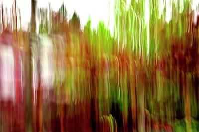 Jerry Sodorff Royalty-Free and Rights-Managed Images - Red Maple Tree ICM by Jerry Sodorff