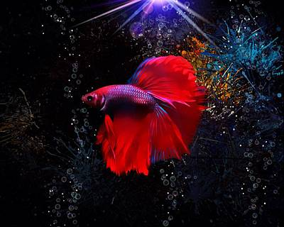 Animals Royalty-Free and Rights-Managed Images - Red Siamese Fighting Fish by Scott Wallace Digital Designs