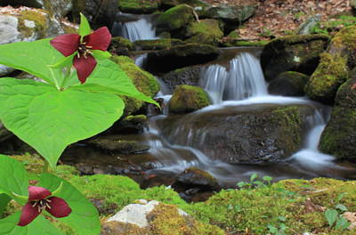 Holiday Pillows 2019 - Red Trilliums and Cascading Brook by John Burk