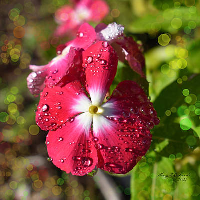 Moody Trees - Red Vinca Morning Dew by Gary F Richards