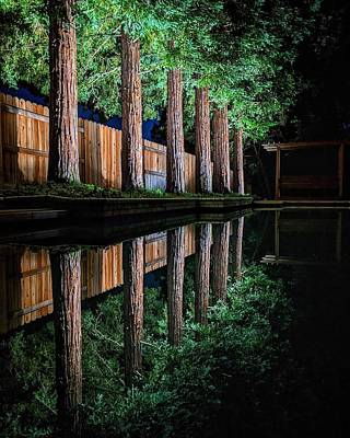 Travel Rights Managed Images - Redwood Reflection Royalty-Free Image by Jason Keinigs