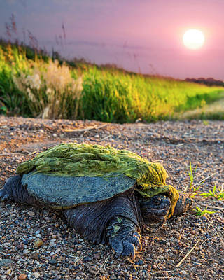 Animals Royalty-Free and Rights-Managed Images - Reptile by Aaron J Groen