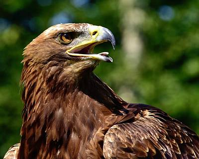 Fruits And Vegetables Still Life - Resplendent Golden Eagle  by Neil R Finlay
