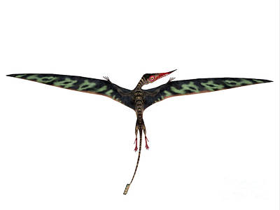David Bowie Royalty Free Images - Rhamphorhynchus Wings Extended Royalty-Free Image by Corey Ford