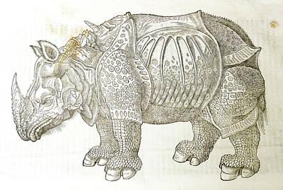 Drawing - Rhino by Jo Johnson