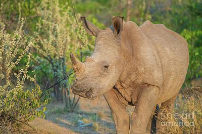 Animals Photos - Rhinoceros Closeup Etosha Namibia by Mike Reid
