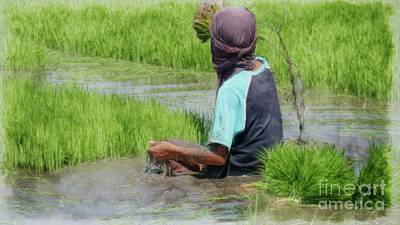 World Forgotten Rights Managed Images - Ricefield preparation Royalty-Free Image by On da Raks