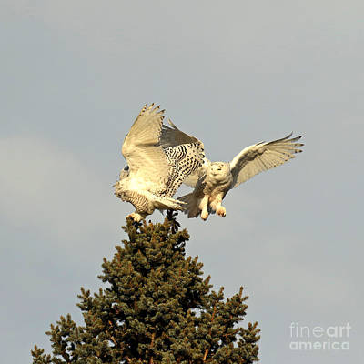 Birds Rights Managed Images - Ring Around the Rosie part 1 Royalty-Free Image by Heather King