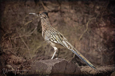 Curated Travel Chargers - Roadrunner - Arizona, USA - 10704 by Wally Hampton