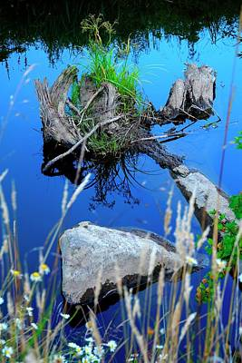 Jerry Sodorff Royalty-Free and Rights-Managed Images - Rock And Stump Reflections by Jerry Sodorff