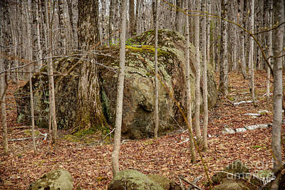 Photograph - Rock Covered in Moss by Alana Ranney