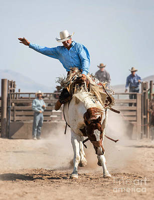 Recently Sold - Animals Photos - Rodeo Cowboy on a Bucking Mustang Bronco by Diane Diederich