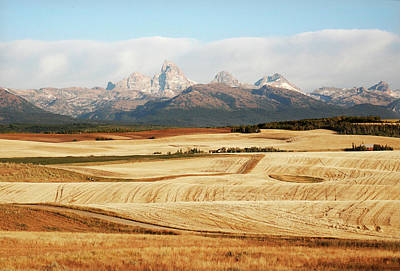 Have A Cupcake - Rolling Cropland and Tetons by Marilyn Hunt