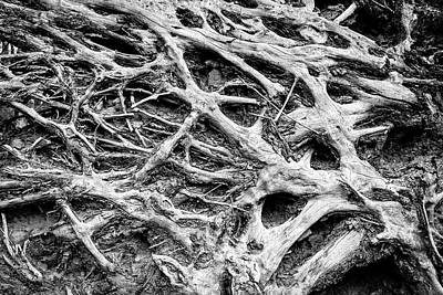 Car Photos Douglas Pittman - Rooted by Alexey Stiop