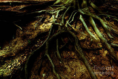 Lovely Lavender - Roots of Darkness by Chris Bee Photography