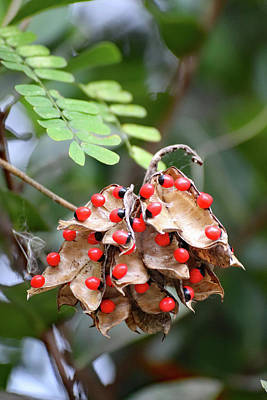 Abstract Water - Rosary Pea Plant by David T Wilkinson